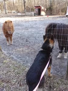 Riot talks to the Horses (2015_12_25 20_59_31 UTC)